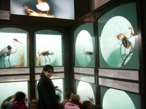 2013_Museo_zoo_018