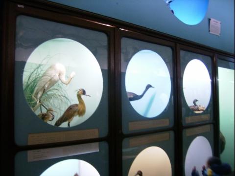 2013_Museo_zoo_023